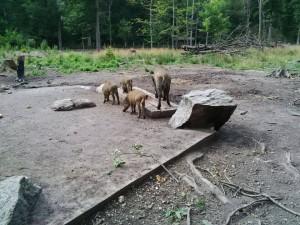 Wildschweine besucht.